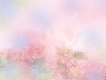 jardines con flores: color de la flor hortensia dulce con estilo suave