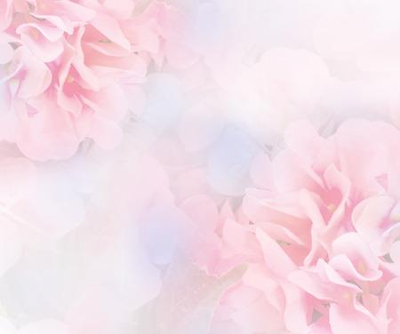 ソフト スタイル甘い色のアジサイの花