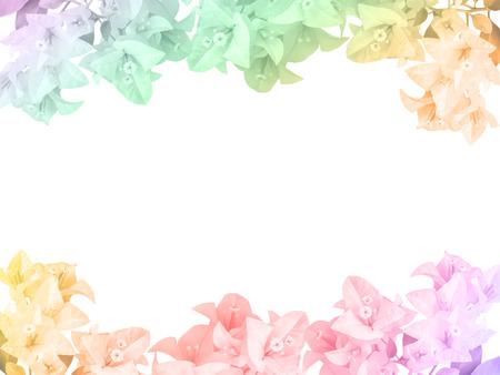 Bougainvillea flower frame ,isolated on white background