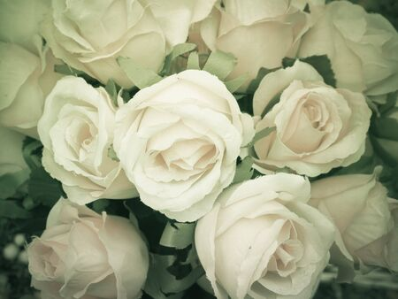 monotone: Close up beauty rose pattern background, monotone color, filter effect Stock Photo