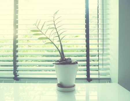 blinder: small plant on white desk beside window, soft style with vintage filter effect.