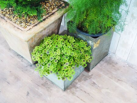 group of plants: Group of small plants in concrete flowerpots