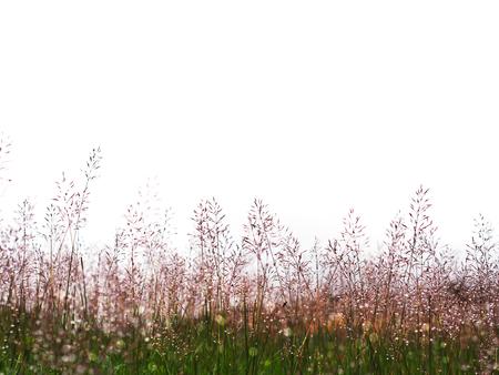Het wilde gras bloeit weide met waterdaling na het regenen
