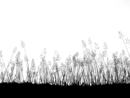 Silhouette wild grass flowers meadow  isolated over white background Reklamní fotografie