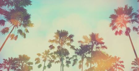 Looking up to palm tree and blue sky at summer beach. Panoramic soft style with vintage filter effect for banner background.  Banco de Imagens