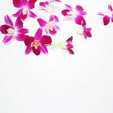 Set of pink orchids on white background with copy space for springtime or summer season.