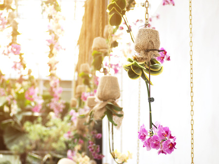 Purple orchids in flower pot wrapping by burlap hanging over white wall. Spa or wedding party decorated by nature. Фото со стока
