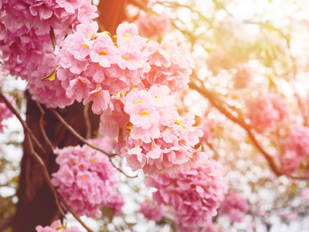 Floral backdrop of pink trumpet flowers with vintage filter effect for springtime or summer. Background for valentines day. Archivio Fotografico