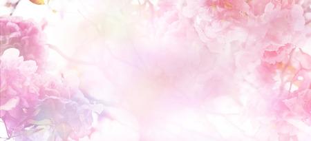 Toile de fond florale abstraite de fleurs roses sur des couleurs pastel avec un style doux pour le printemps ou l'été. Fond de bannière avec espace de copie.