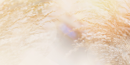 Abstrakter mit Blumenhintergrund mit Kopienraum. Nahaufnahme von Wildgrasblumen auf der Wiese am Morgen mit weichem Stil. Bannergröße. Standard-Bild