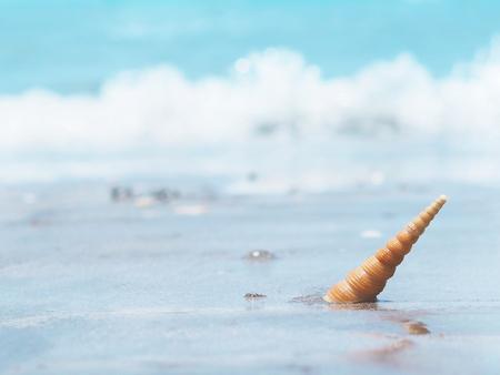 Orange small seashell on the seashore. Summer beach on holiday vacation concept background.