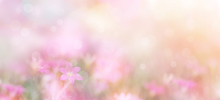 Abstract floral backdrop of small pink flowers over pastel colors with soft style for spring or summer time. Banner background with copy space. 免版税图像