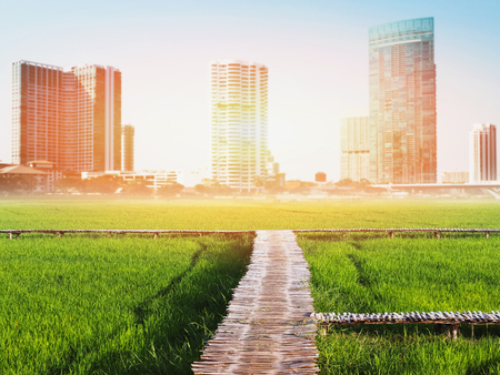 Double exposure landscape of green rice field and wooden pathway with sunlight over cityscape blur background.