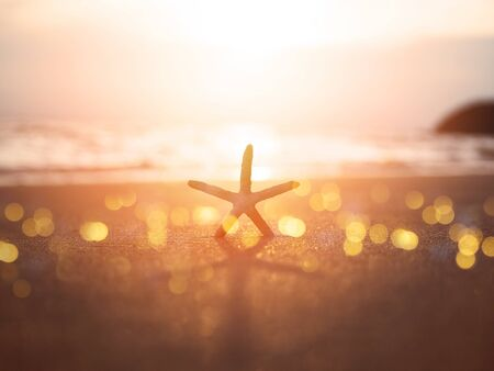 Silhouette starfish on sand at sunset with copy space. Vacation on summer beach background concept.