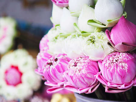Close up white and pink lotus flower bouquet arrangement for buddhism