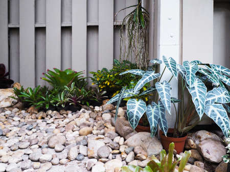 small tropical plant and stone on the ground for garden decoration at narrow space. Foto de archivo