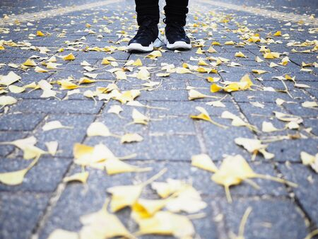 Human feet wearing black sneaker shoes standing on the street with ginkgo leaves falling down in autumn.