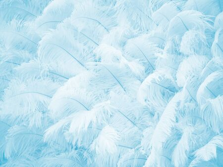 Blue feather wallpaper texture and soft background. Imagens