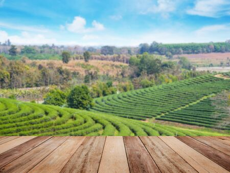 floor tiles wood pattern or wooden top table over green tea field in the north of Thailand. Spring time landscape and background. Montage style to display organic product. Stock Photo