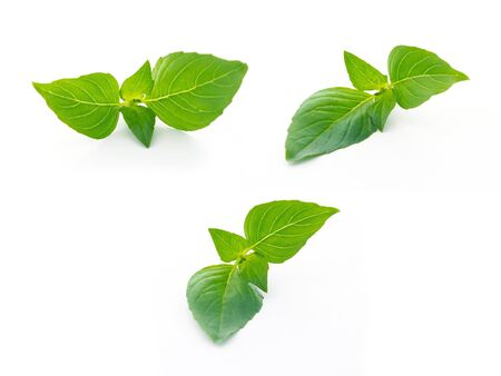 Top view of basil leaves ingredient food on white background.