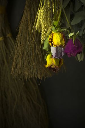 myrtales: Herbs and flowers from our garden on a drying rack.