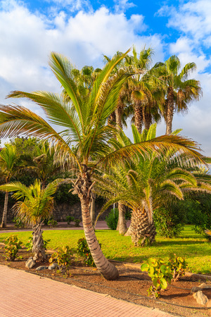 adeje: Exotic coastal promenade with palm trees in Costa Adeje holiday town, Tenerife, Canary Islands, Spain Stock Photo