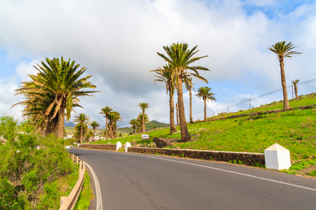 palm lined: Road lined with palm trees to Haria mountain village, Lanzarote, Canary Islands, Spain
