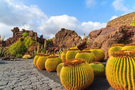 Tropical cactus garden in Guatiza village, Lanzarote, Canary Islands, Spain Banque d'images