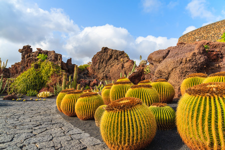 Tropical cactus garden in Guatiza village, Lanzarote, Canary Islands, Spain 免版税图像