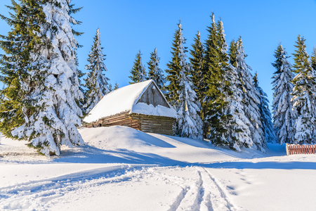 Wooden hut in forest in winter scenery of Gorce Mountains, Poland