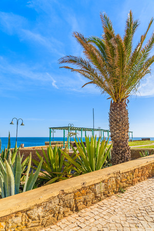 Palm tree and tropical plants on coastal promenade in Luz town, Algarve region, Portugal