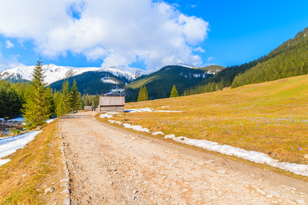 Mountain road with blooming crocus flowers in Chocholowska valley, Tatra Mountains, Poland Stock Photo