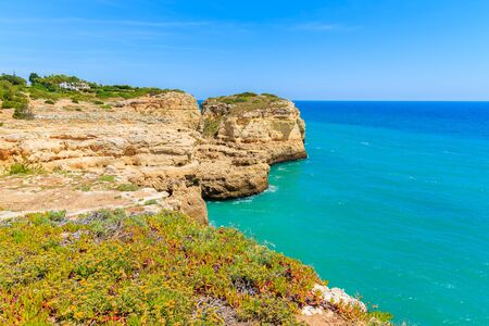 Spring flowers on coast of Portugal near Carvoeiro town, Algarve region
