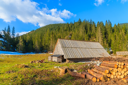 Pile of wood and old hut on meadow with blooming crocus flowers in Chocholowska valley, Tatra Mountains, Poland