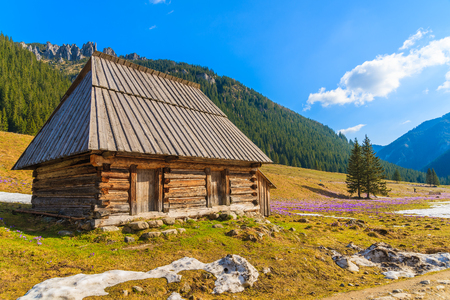 Wooden hut in Chocholowska valley in spring, Tatra Mountains, Poland