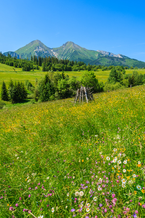 Colorful flowers on green meadow in Tatra Mountains, Slovakia