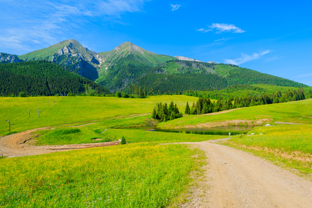 Road in green valley in summer landscape of Tatra Mountains, Slovakia Фото со стока