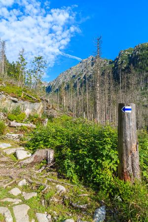 Hiking trail sign on tree in summer landscape of High Tatra Mountains, Slovakia