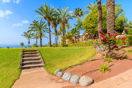 gran canaria: Wooden steps and palm trees in tropical garden on Tenerife island, Spain