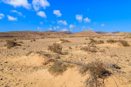 Desert landscape of Sotavento beach on Jandia peninsula, Fuerteventura, Canary Islands, Spain