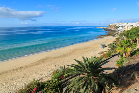 Palm tree on Morro Jable promenade along a sandy beach on Jandia peninsula, Fuerteventura, Canary Islands, Spain