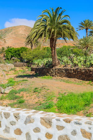 White wall made of lava stone and palm tree on field in Betancuria village, Fuerteventura island, Spain