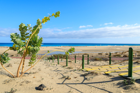 Steps to Morro Jable sandy beach on coast of Jandia peninsula, Fuerteventura, Canary Islands, Spain