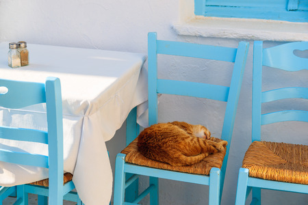 A cat sleeping on a chair in Greek tavern, Naoussa village, Paros island, Greece