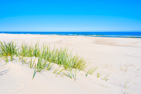 Green grass on sand dune on Lubiatowo beach, Baltic Sea, Poland