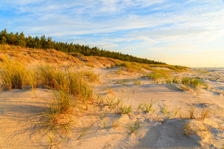 Grass on sand dune and sunset over Leba beach, Baltic Sea, Poland Stock Photo