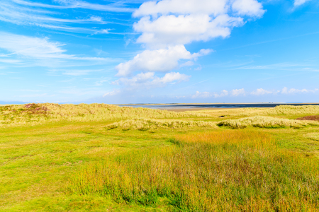 Green meadow in countryside landscape of Sylt island near List village, Germany