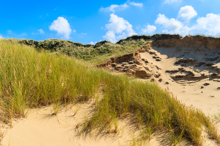 Grass on sand dunes on sunny summer day, Sylt island, Germany