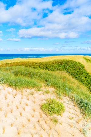 View of grass sand dune near Westerland village on coast of Sylt island, North Sea, Germany