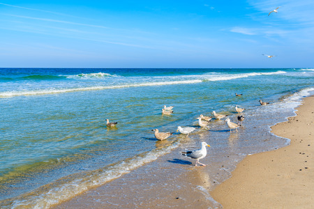Seagulls on shore of North Sea at Kampen beach, Sylt island, Germany Stockfoto